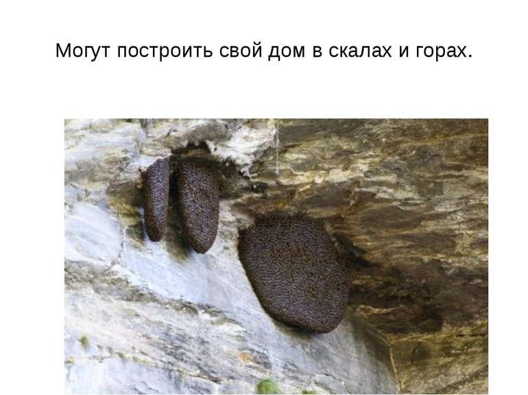 Могут построить свой дом в скалах и горах.