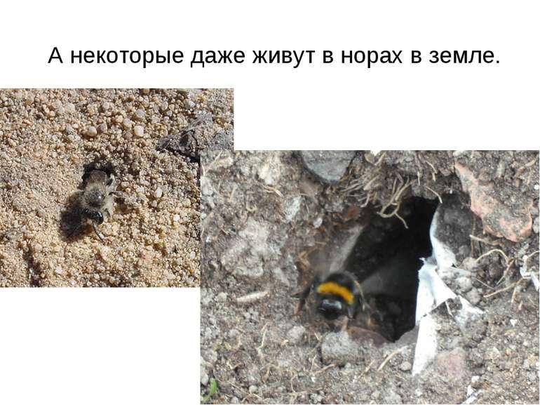 А некоторые даже живут в норах в земле.