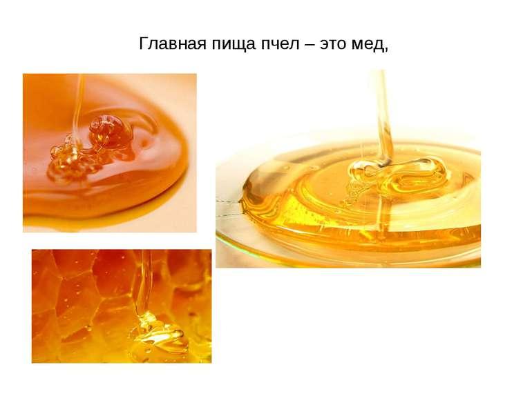 Главная пища пчел – это мед,