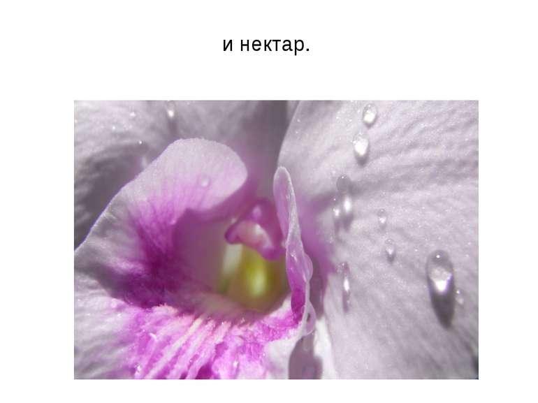и нектар.