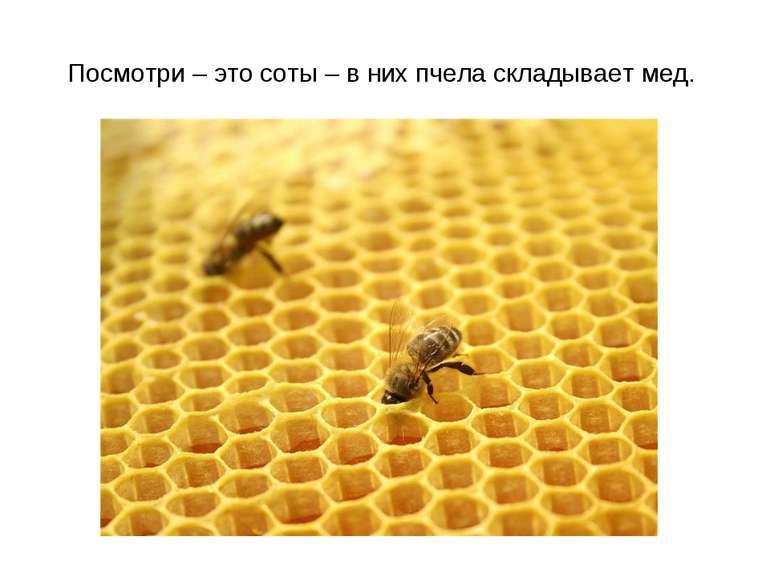 Посмотри – это соты – в них пчела складывает мед.