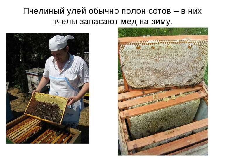 Пчелиный улей обычно полон сотов – в них пчелы запасают мед на зиму.