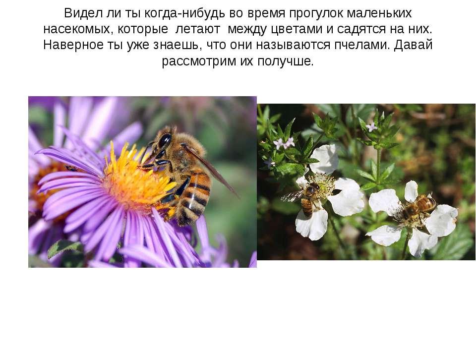 Видел ли ты когда-нибудь во время прогулок маленьких насекомых, которые летаю...