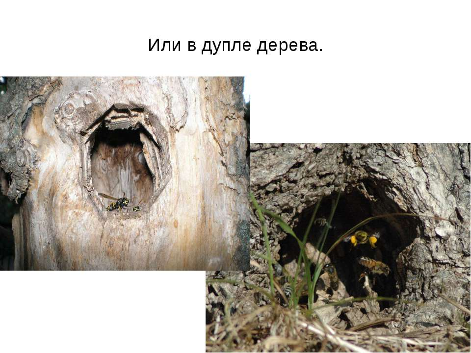 Или в дупле дерева.