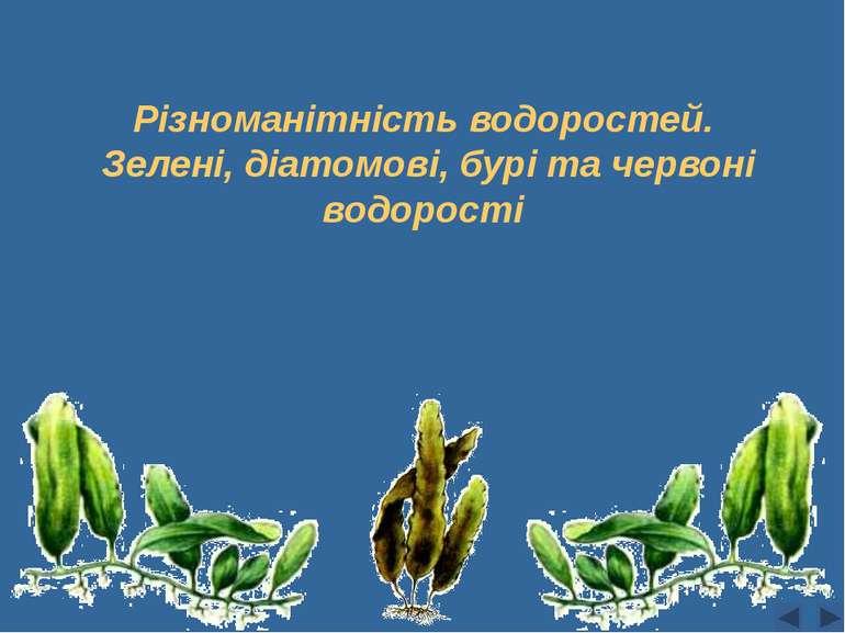 Різноманітність водоростей. Зелені, діатомові, бурі та червоні водорості