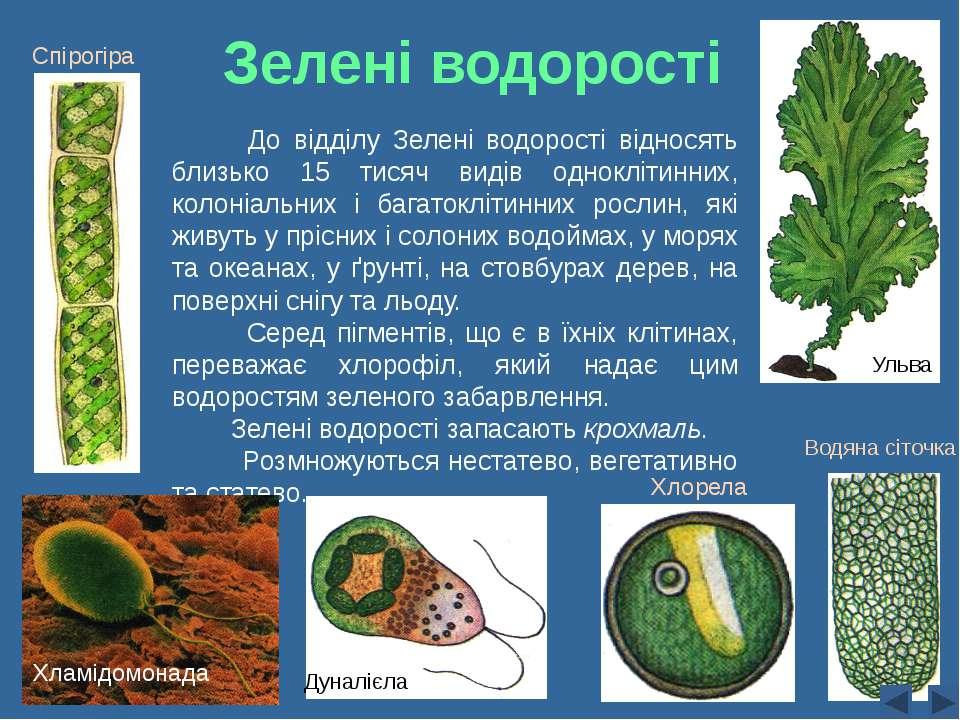 Зелені водорості До відділу Зелені водорості відносять близько 15 тисяч видів...