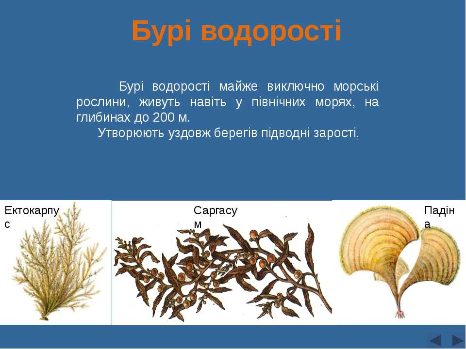 Бурі водорості Бурі водорості майже виключно морські рослини, живуть навіть у...