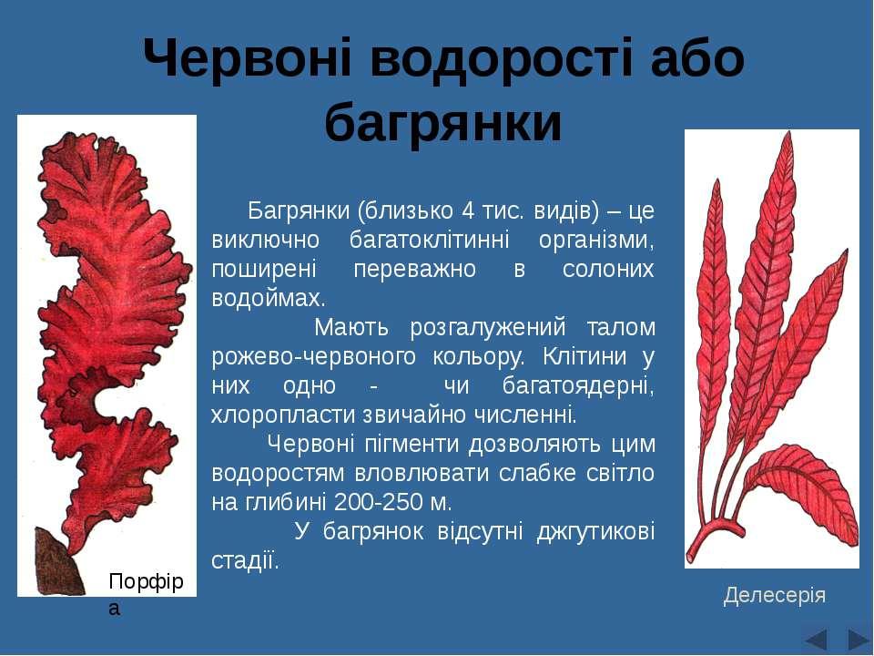 Червоні водорості або багрянки Багрянки (близько 4 тис. видів) – це виключно ...