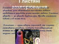 Глистяні захворювання Глистяні інвазії завжди вважалися «дитячою» хворобою, х...