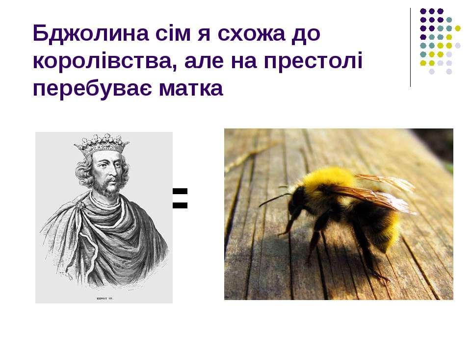 Бджолина сім я схожа до королівства, але на престолі перебуває матка =