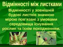Відмінності у зовнішній будові листків значною мірою пов'язані з умовами сере...
