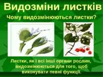 Чому видозмінюються листки? Листки, як і всі інші органи рослин, видозмінюють...