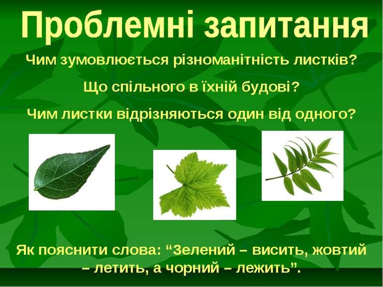 Чим зумовлюється різноманітність листків? Що спільного в їхній будові? Чим ли...