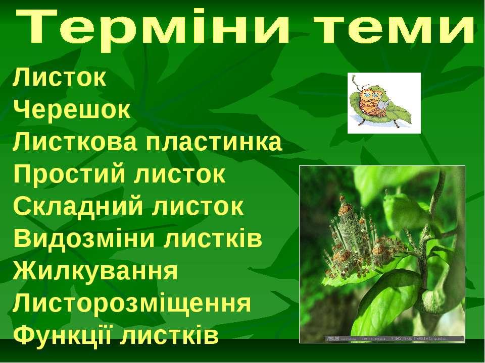 Листок Черешок Листкова пластинка Простий листок Складний листок Видозміни ли...
