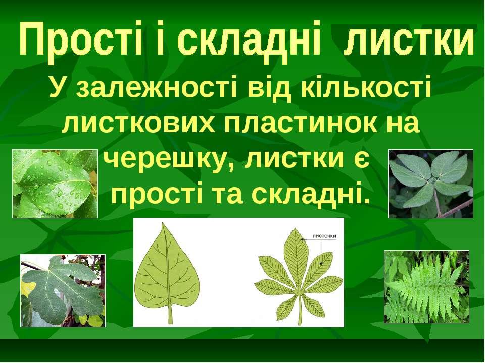 У залежності від кількості листкових пластинок на черешку, листки є прості та...