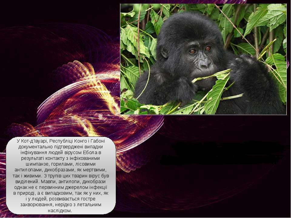 У Кот-д'Івуарі, Республіці Конго і Габоні документально підтверджені випадки ...
