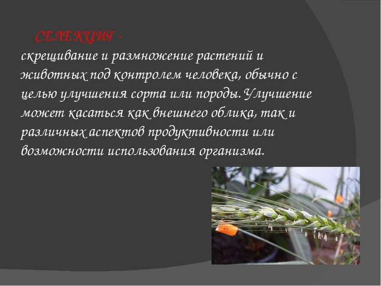 СЕЛЕКЦИЯ - скрещивание и размножение растений и животных под контролем челове...
