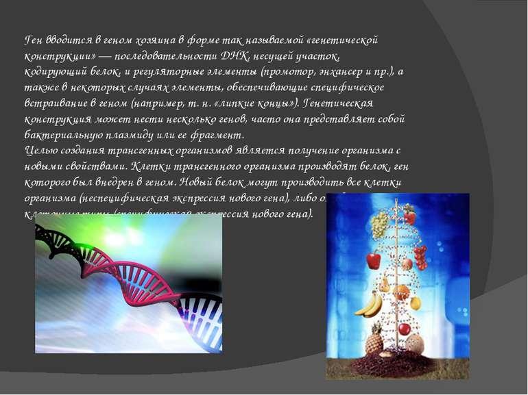 Ген вводится в геном хозяина в форме так называемой «генетической конструкции...