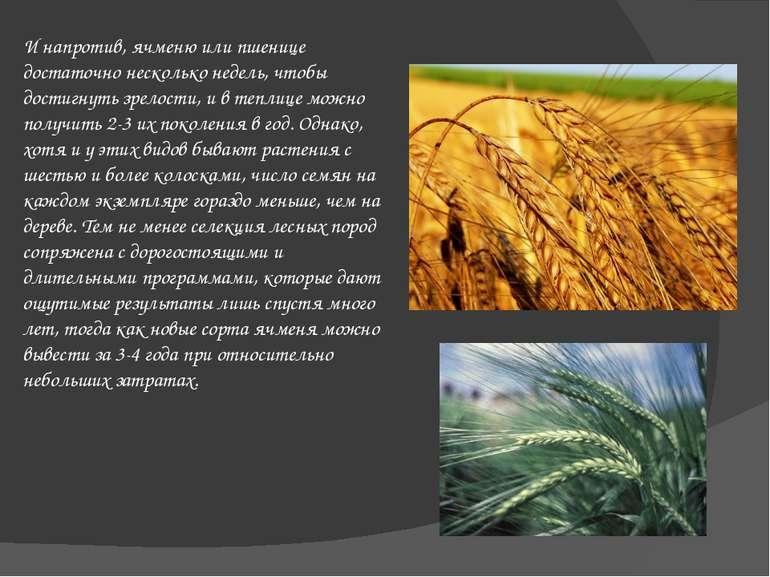 И напротив, ячменю или пшенице достаточно несколько недель, чтобы достигнуть ...