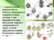 У одноклітинних водоростей не можуть утворюватися справжні статеві клітини. У...