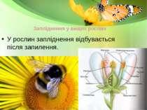 Запліднення у вищих рослин У рослин запліднення відбувається після запилення.