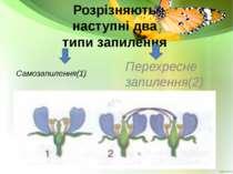 Розрізняють наступні два типи запилення Самозапилення(1) Перехресне запилення(2)