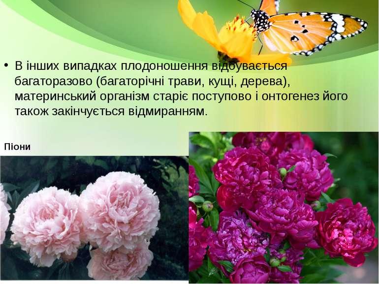 В інших випадках плодоношення відбувається багаторазово (багаторічні трави, к...