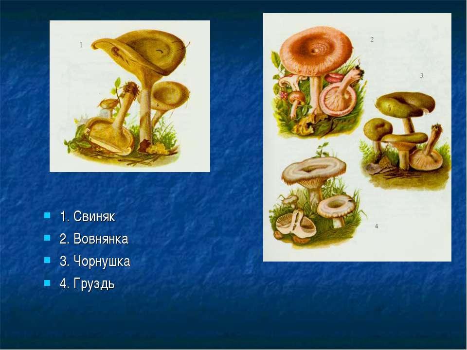 1. Свиняк 2. Вовнянка 3. Чорнушка 4. Груздь