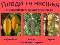 карамболь плоди свічкового дерева Різноманітність екзотичних плодів дуріан