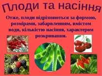 Отже, плоди відрізняються за формою, розмірами, забарвленням, вмістом води, к...