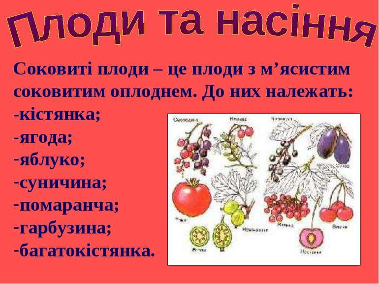 Соковиті плоди – це плоди з м'ясистим соковитим оплоднем. До них належать: -к...