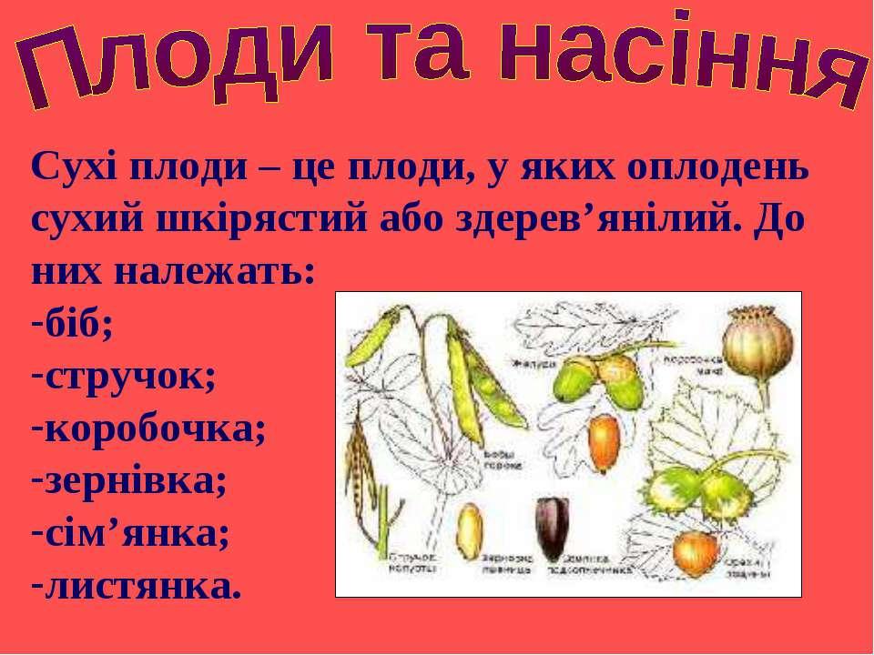 Сухі плоди – це плоди, у яких оплодень сухий шкірястий або здерев'янілий. До ...