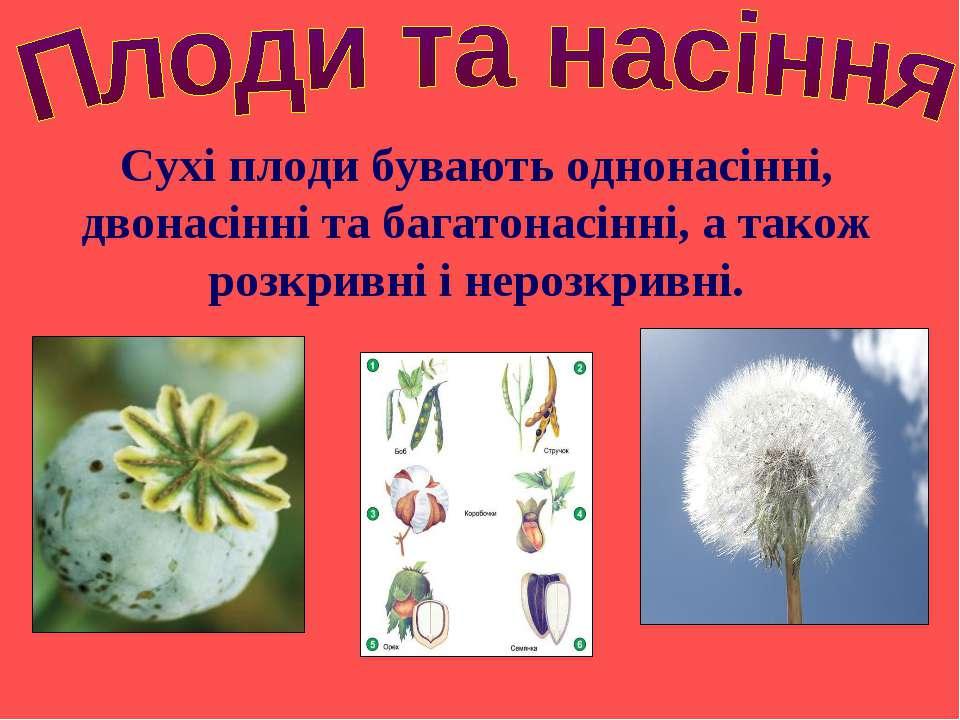 Сухі плоди бувають однонасінні, двонасінні та багатонасінні, а також розкривн...