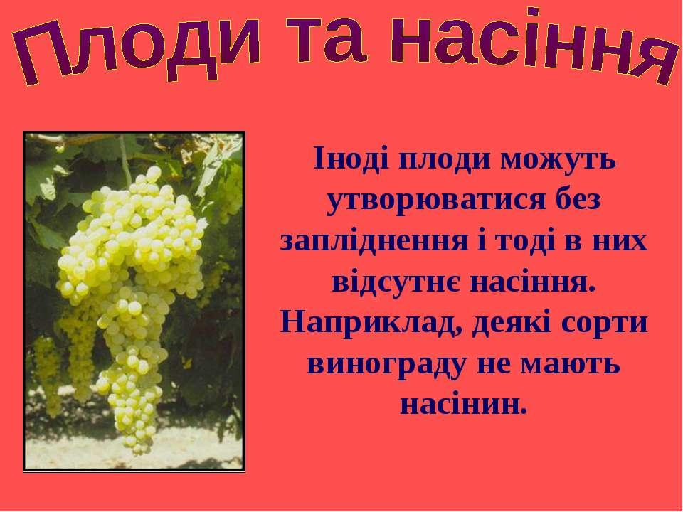 Іноді плоди можуть утворюватися без запліднення і тоді в них відсутнє насіння...