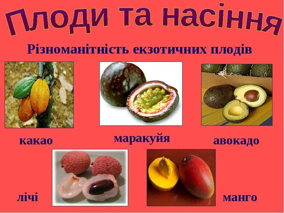 Різноманітність екзотичних плодів авокадо какао манго маракуйя лічі