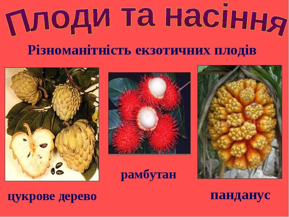 Різноманітність екзотичних плодів панданус цукрове дерево рамбутан