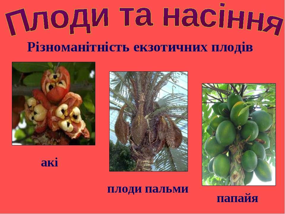 Різноманітність екзотичних плодів папайя плоди пальми акі
