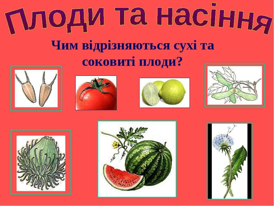 Чим відрізняються сухі та соковиті плоди?