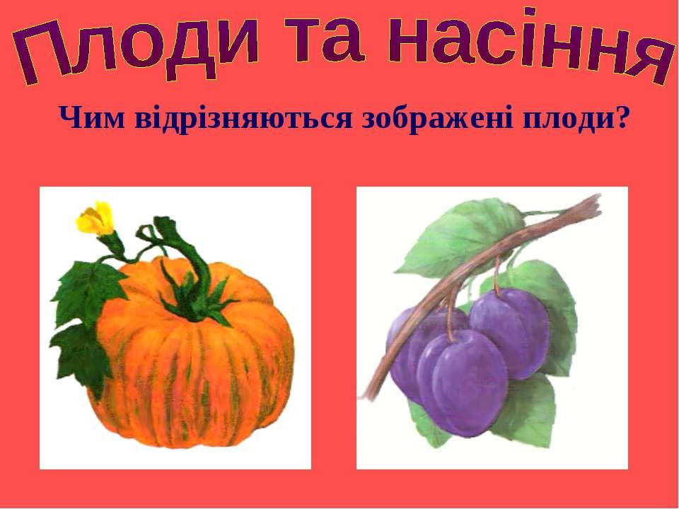 Чим відрізняються зображені плоди?