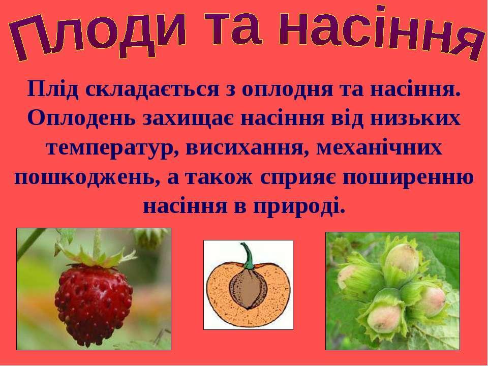 Плід складається з оплодня та насіння. Оплодень захищає насіння від низьких т...