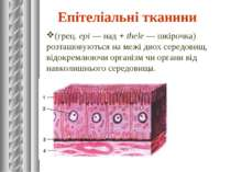 Епітеліальні тканини (грец.epi— над+thele— шкірочка) розташовуються нам...