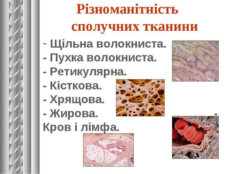 Різноманітність сполучних тканини Щільна волокниста. - Пухка волокниста. - Ре...