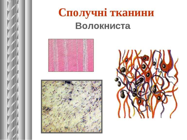 Волокниста Сполучні тканини