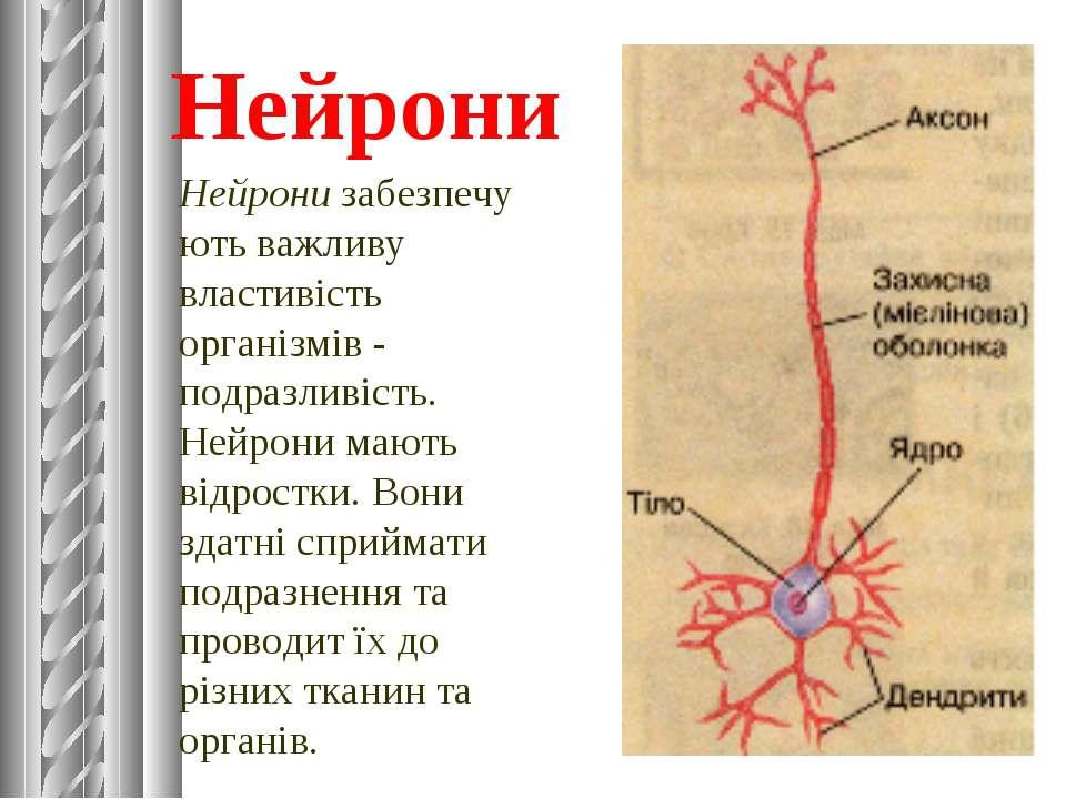 Нейрони Нейронизабезпечують важливу властивість організмів - подразливість. ...