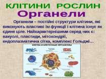 Органели – постійні структури клітини, які виконують властиві їм функції і кл...