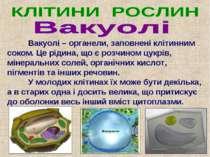 Вакуолі – органели, заповнені клітинним соком. Це рідина, що є розчином цукрі...