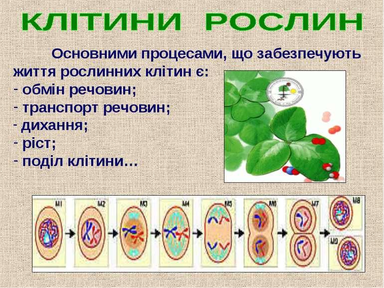 Основними процесами, що забезпечують життя рослинних клітин є: обмін речовин;...