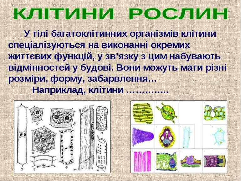 У тілі багатоклітинних організмів клітини спеціалізуються на виконанні окреми...