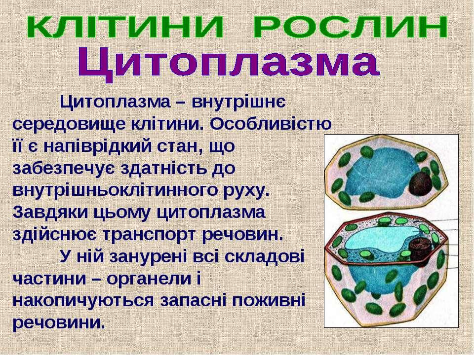 Цитоплазма – внутрішнє середовище клітини. Особливістю її є напіврідкий стан,...