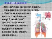 Значення дихання - Забезпечення організму киснем. - Видалення вуглекислого га...